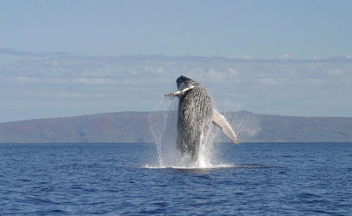 How whales evolved