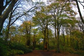 Childwall Woods 5