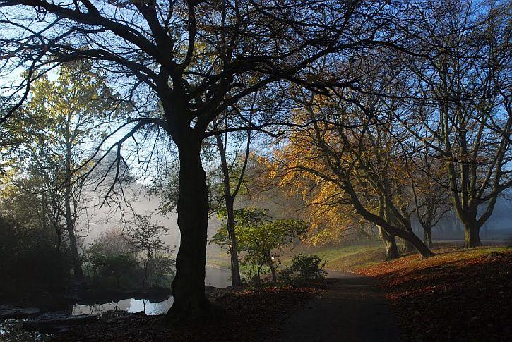 Mist Sefton Park