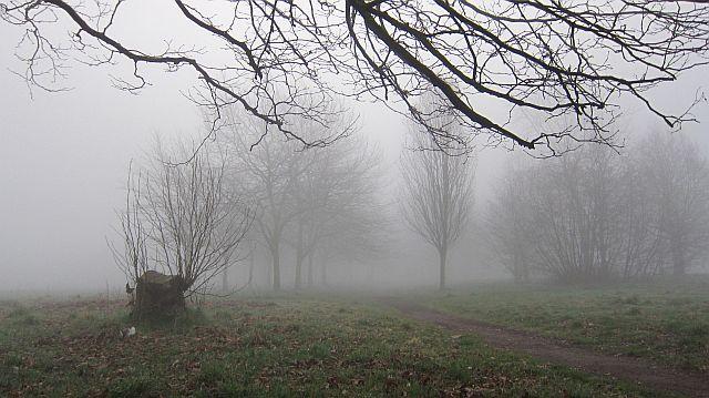 Sefton Park 64