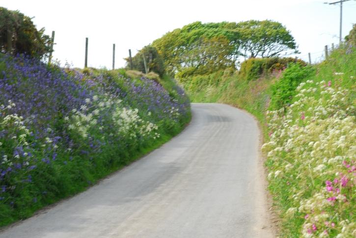 A lane on the Lleyn