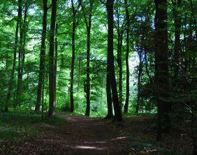 Painswick wood