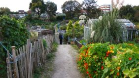 Dingle Vale allotments