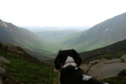 Walking Arran: two glens and the dog on top of the world