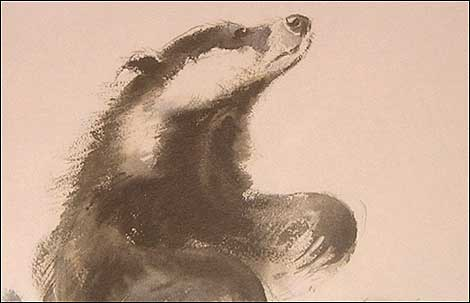Badger by Eileen Soper