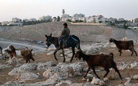 Palestinian Bedouin boy rides a donkey near the Jewish settlement of Maale Adumim