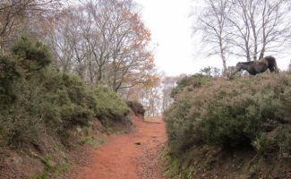 Bickerton Hill