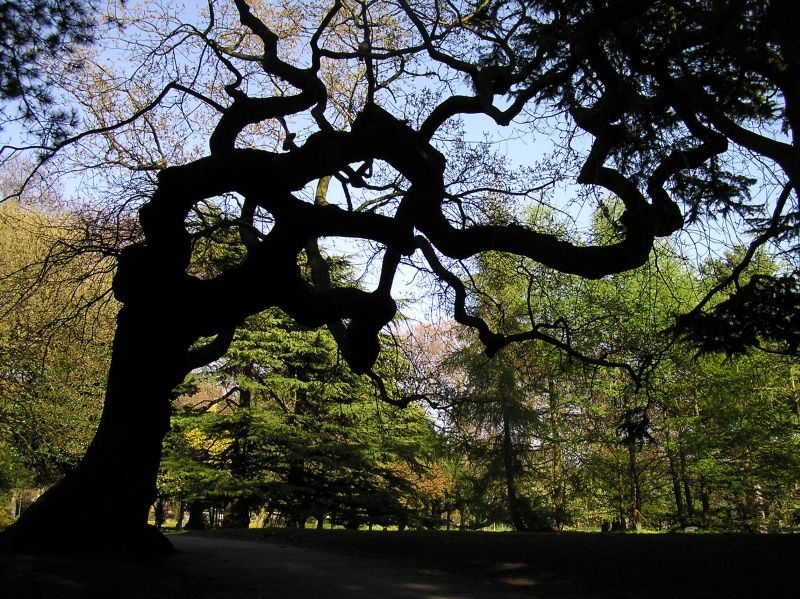 The Meaning Of Trees That 39 S How The Light Gets In