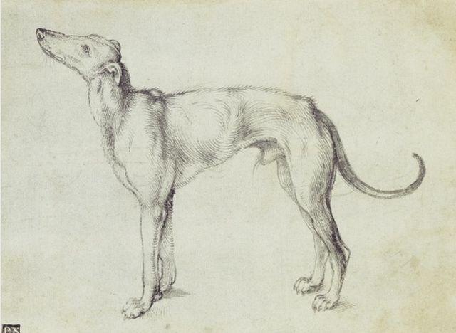 Durer, A Greyhound, 1500