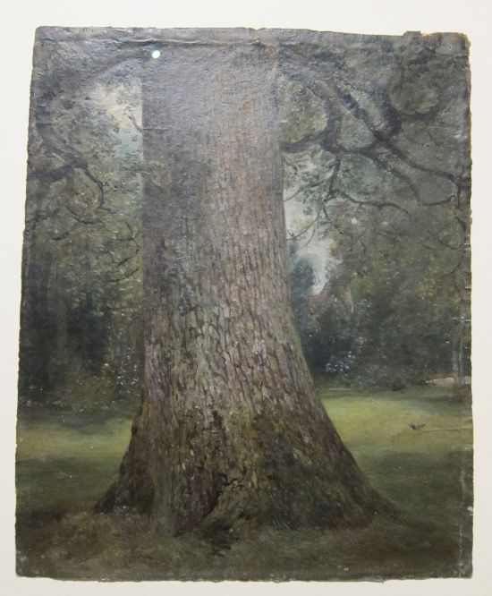 Study of the Trunk of an Elm Tree