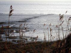 Coastal Reserve 19
