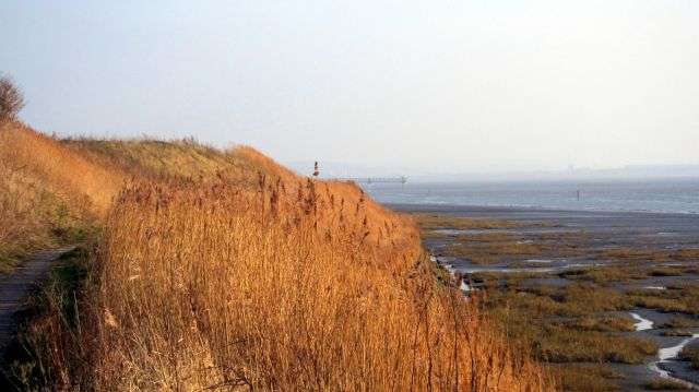 Coastal Reserve 3
