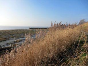 Coastal Reserve 6
