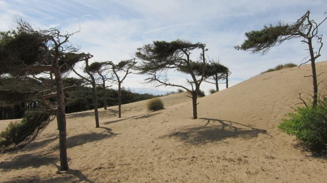 Ainsdale 1