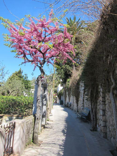 Capri 29