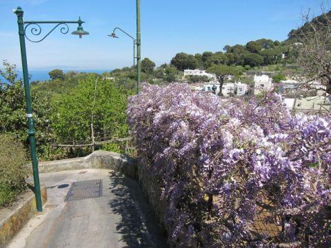 Capri 41
