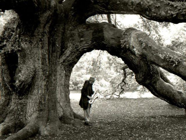 Charles Lloyd beneath a tree