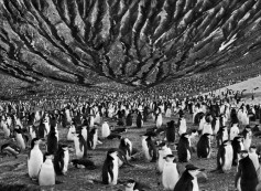 colony of chinstrap penguins Mount Michael, active volcano in South Sandwich Islands