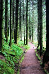 Eas Mor forest walk