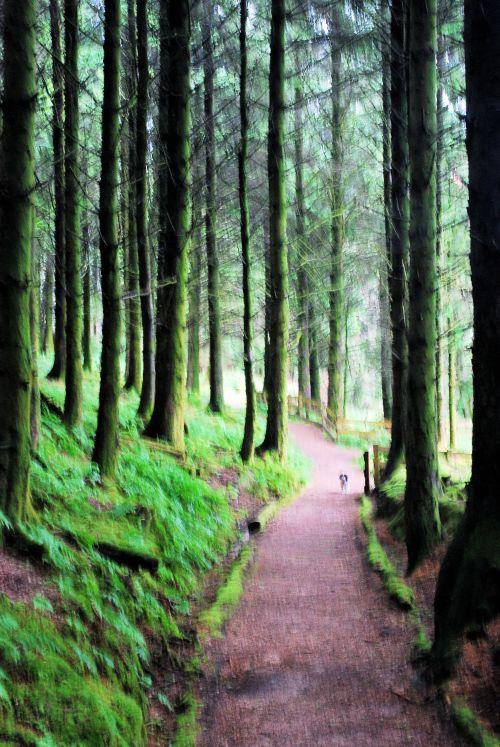 Eas Mor forest walk
