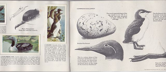 Tunnicliffe, Wild Birds album, 1965
