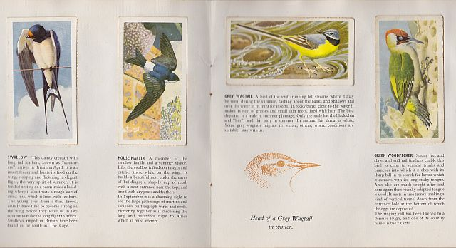 Tunnicliffe, Bird Portraits cards, 1957