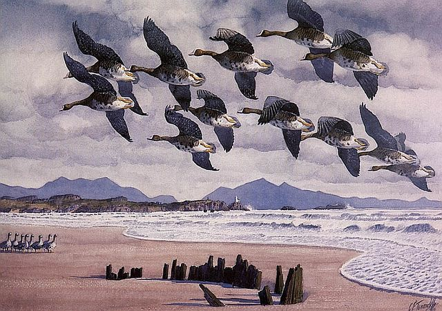 Tunnicliffe, Coming in to land