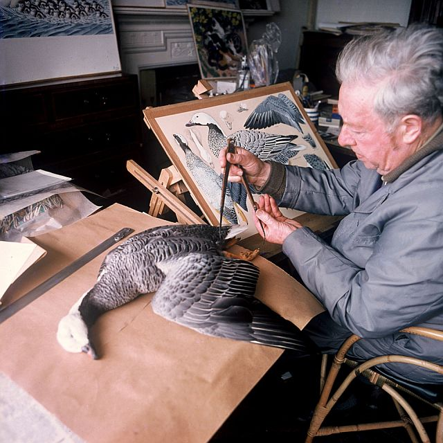 Charles Tunnicliffe painting a measured drawing