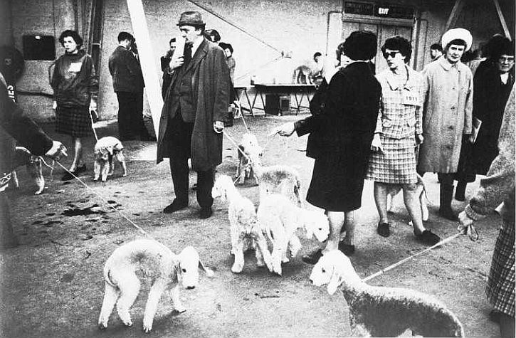 Crufts, 1968 by Tony Ray-Jones