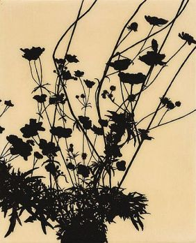 Edward Chell, Eclipse, Creeping Buttercup (Ranunculus Repens)
