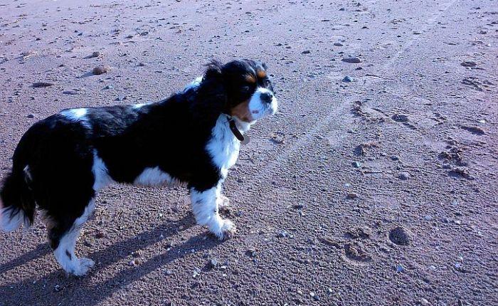 Walking the Dee shore at Thurstaston with birthdaydog