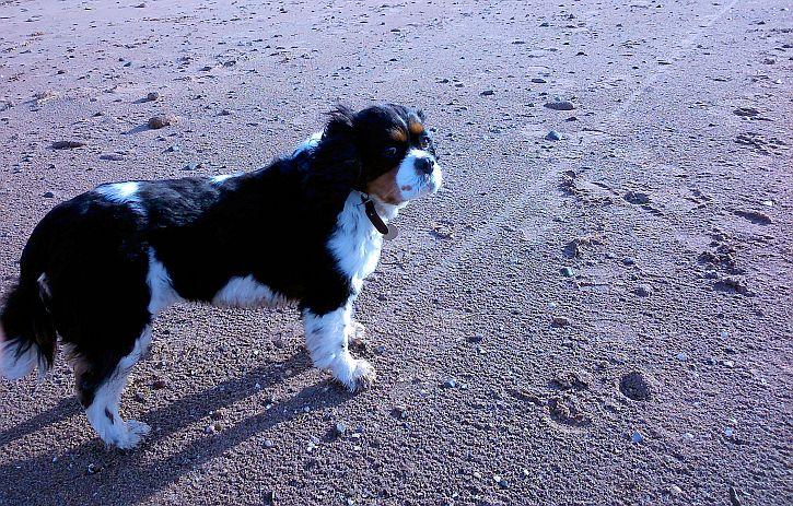 Thursaston dog
