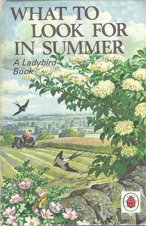 Ladybird Summer cover