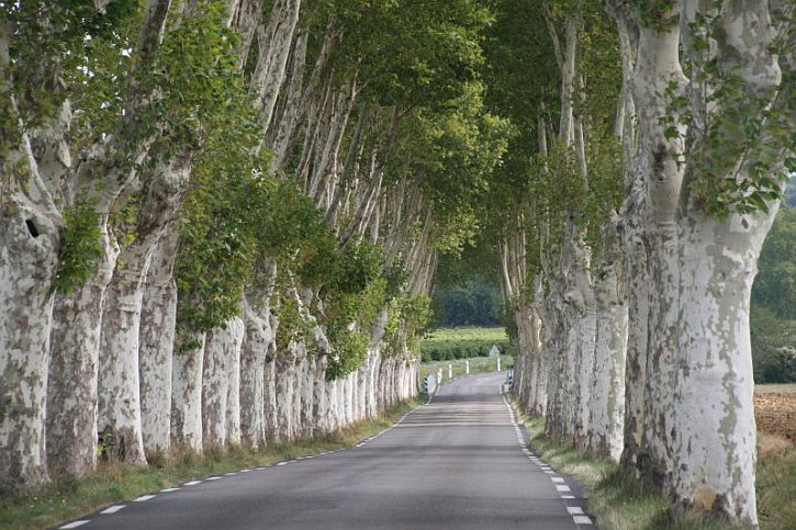 A typical Poplar Tree lined road - south of France photo by Brian Jones httpbracken.pixyblog.com