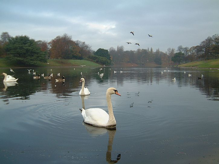 Sefton Park Boating Lake