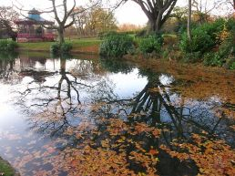 Upper Brook 8
