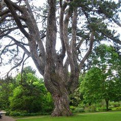 Oxford Botanical 3