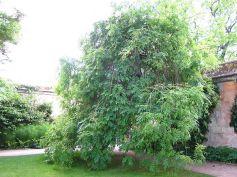 Oxford Botanical 4