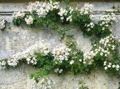 Oxford Botanical 5