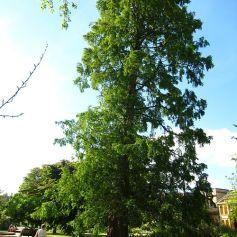 Oxford Botanical 7