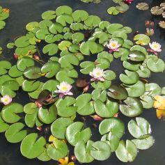 Oxford Botanical 9