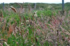 Grasses of many sorts