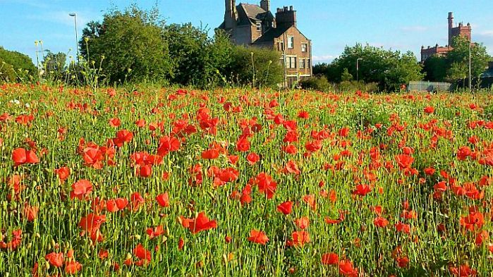Summer in the city: poppies and a sense offoreboding