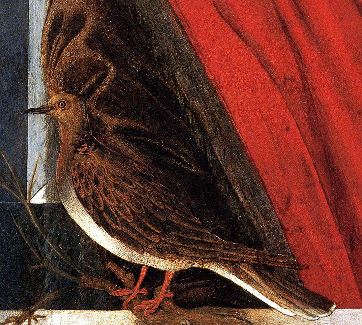 Fioretta Gorini depicted as turtle dove