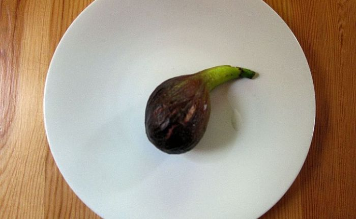 First fig: 'every fruit has itssecret'