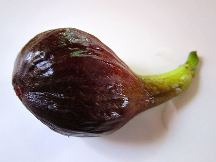 First fig 5