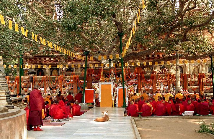 The Bodhi Tree at the Mahabodhi Temple