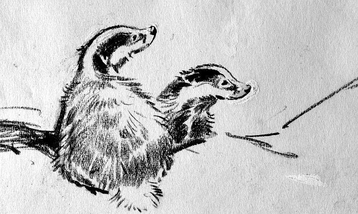 Badger cubs by Eileen Soper