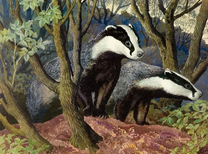 CF Tunnicliffe, Badgers