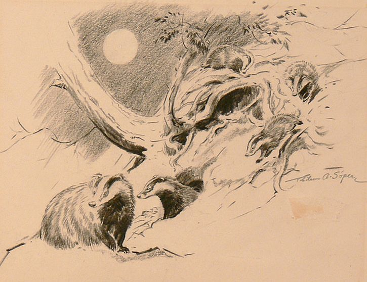 Sketch of five badger cubs at play by Eileen Soper